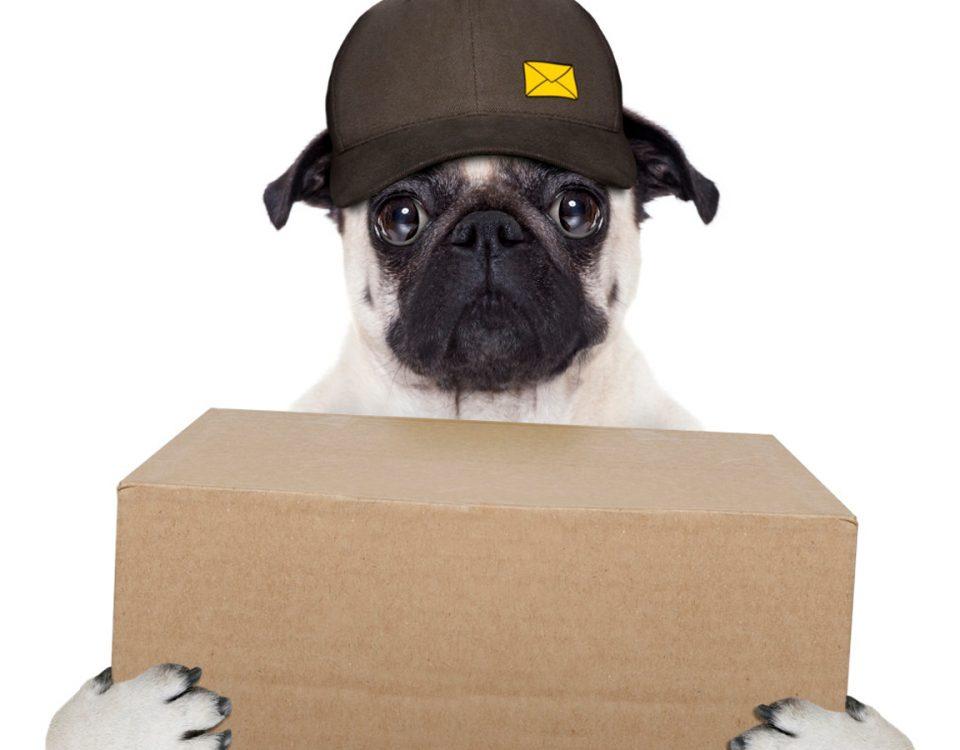 Hund bringt Paket mit Magneten
